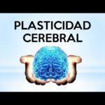 plasticidad
